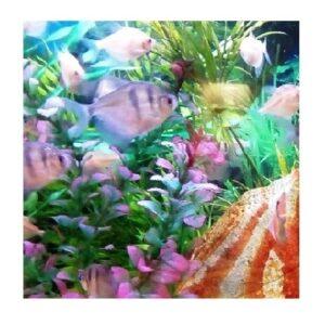 Akvarie- & Terrariedjur